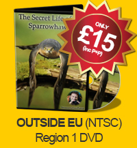 The Secret Life of the Sparrowhawk - DVD (OUTSIDE EU NTSC - Region 1)