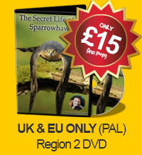 The Secret Life of the Sparrowhawk - DVD (UK & EUR PAL - Region 2)